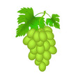 realistic green grapes isolated vector image