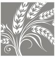 Stylized ears of wheat on grey vector image vector image