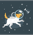 dog in space suit vector image