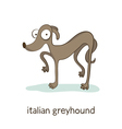 Italian greyhound Dog character isolated on white vector image