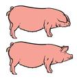 Hand drawn pig isolated pork farm bacon sketch vector image