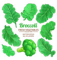 broccoli elements set on white background vector image