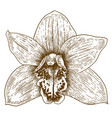 engraving of orchid flover vector image vector image
