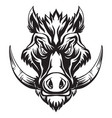head mascot boar isolated on white vector image