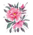 Pink peony vector image