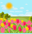 tulip flowers field sunny day blue sky vector image