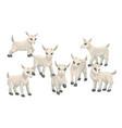 cartoon baby goat cubs farm animals