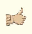 hand showing like symbol sketch thumbs up vector image vector image