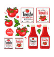 set of template labels for tomato ketchup vector image