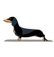 dachshund minimalist image vector image vector image