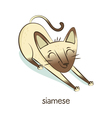 Siamese Cat character isolated on white vector image vector image