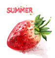 strawberry isolated watercolor fresh fruit summer vector image