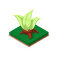 green decorative plant isometric 3d icon vector image