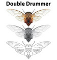 double drummer in three sketches vector image