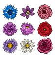 collection set of flower heads isolated on white vector image
