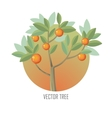 Orange Tree with Green Leaves and Oranges vector image vector image