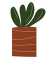 simple a plant with round leaves in a brown vector image vector image