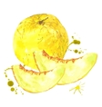 Watercolor melon summer hand drawn fruit vector image