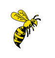 yellowjacket wasp drawing vector image vector image