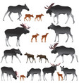 collection of mooses also named elks and its cubs vector image vector image