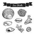 sea shells and corals collection vector image vector image
