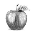 apple fruit with leaf scratch vector image vector image