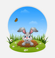 cartoon rabbit come out of the hole on the grass vector image vector image