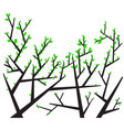 silhouettes trees and leaves vector image