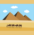 camels and bedouin in desert with egyptian vector image