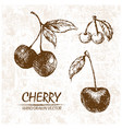 digital detailed cherry hand drawn vector image vector image