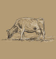 hand drawing cow2 vector image