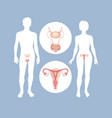 silhouettes of men and women with sexual organs vector image