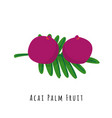 acai palm fruit flat vector image vector image