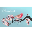 Bird on the cherry branch vector image vector image