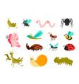 cute bugs set cartoon colorful garden animals vector image vector image