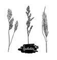 drawing spikelets set vector image vector image