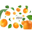 flying apricot realistic 3d apricots vector image vector image