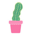 green catcti with thorns in flowerpot vector image vector image