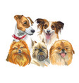 set of small dog breeds vector image vector image