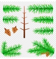 spruce branch transparent background vector image vector image