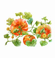 three orange pumpkins grow on the bed watercolor vector image vector image