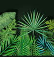 tropical and exotic palms leafs vector image vector image