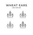 set line icons wheat ears vector image