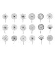 dandelion flowers fluffy meadow flower with seeds vector image