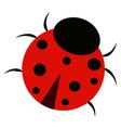 ladybug on white background vector image vector image