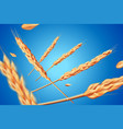 realistic wheat oats elements flying detailed vector image