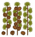 set of color images of larch and cones vector image vector image