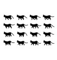 cat walk animation domestic animal silhouette vector image