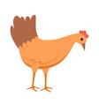 farm bird eating peking chicken poultry vector image vector image