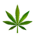 green realistic marijuana leaf medical cannabis vector image